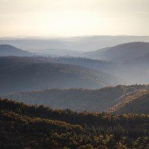 Foto: Bergpanorama im Pfälzer Wald