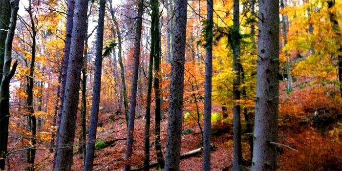 Wandertipp: Die Nellohütte im Pfälzerwald