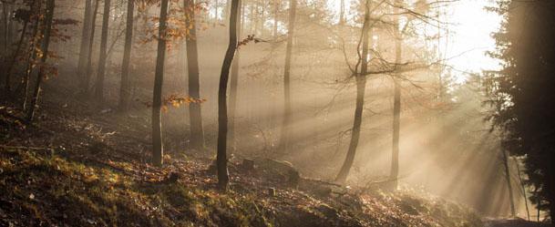 Foto-Tour durch den Pfälzerwald im Herbst!