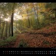 pfalz-wald-kalender